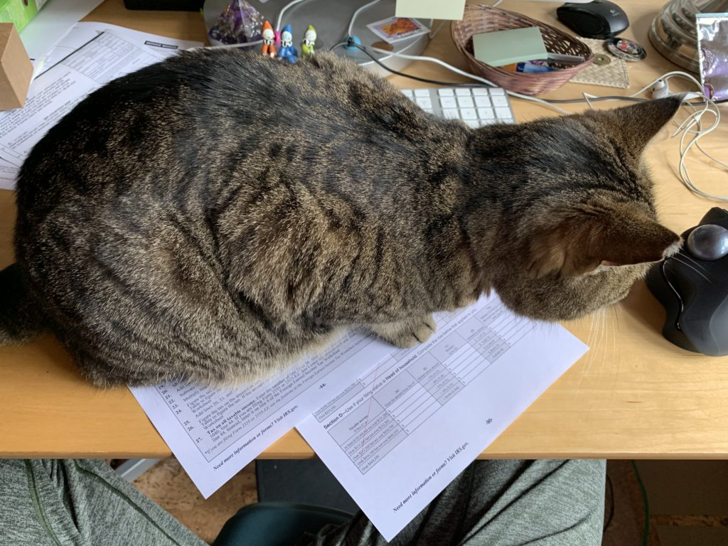 Cat sitting on papers on a desk